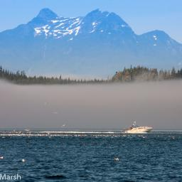 Marine excursion to Johnstone Strait