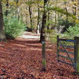 Walk: Greys Court, Lower Highmore
