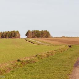 Walk: Harwell to the Ridgeway