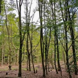 Walk: Whitchurch Hill - Mappledurham