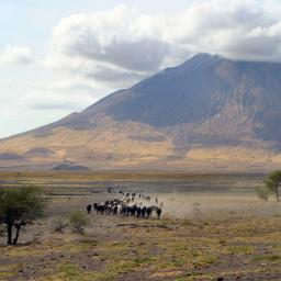 Where Maasai struggle for existence in the harsh landscape